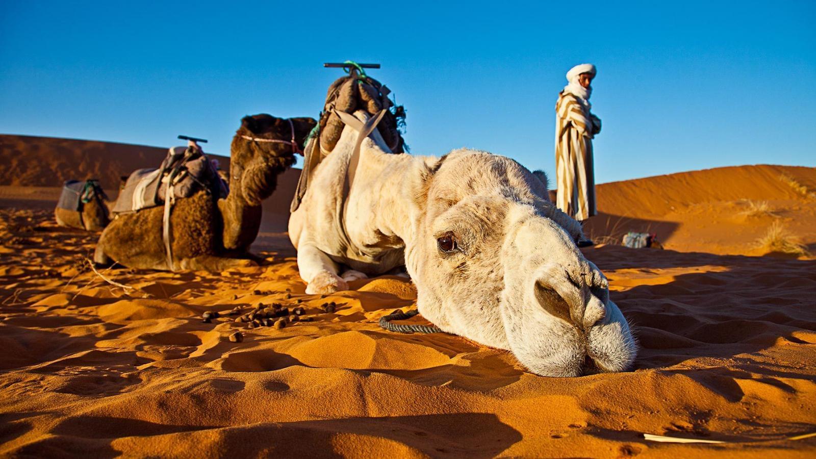 Camel Trekking Amp Excursions Destination Morocco Tours